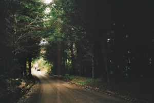 beautiful-car-forest-nature-people-Favim.com-407804